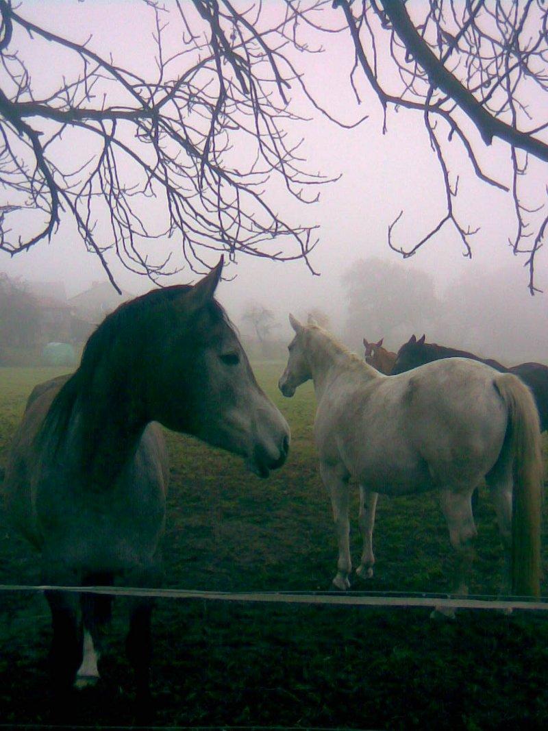 horses coming closer