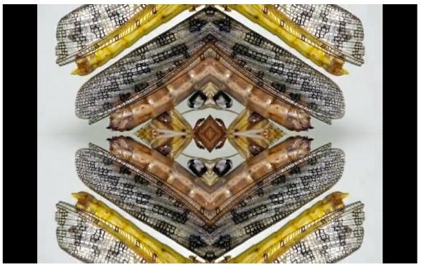 Screenshot aus dem Video SOFT EVOLUTION von Liesl Ujvary